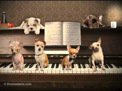 cartes-anniversaire-virtuelles-musicales.jpg